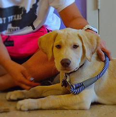 mankissingdog