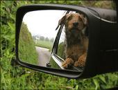 mirrordog