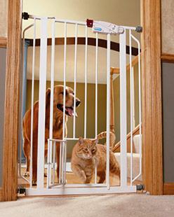 gate-cat