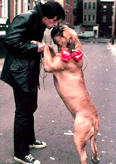 Even Rocky Balboa had a dog!